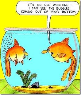 fish-fart